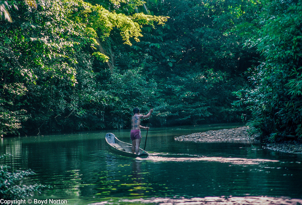 Iban people, man rowing longboat on Skrang River, Sarawak, Borneo, Malaysia. The Iban were former headhunters.