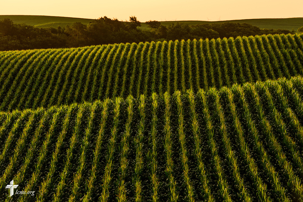 The sun sets over a cornfield near Mission Central on Saturday, July 18, 2015, in Mapleton, Iowa. LCMS Communications/Erik M. Lunsford