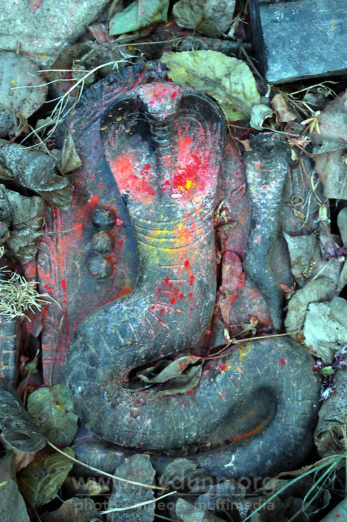 India, Gokarna, 2006. An incarnation of Shiva, Hinduism's creator and destroyer, is paid tribute to at the base of a neem tree..