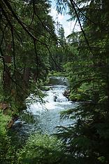 Rogue River Fly Fishing Photos - summer steelhead, stock photos