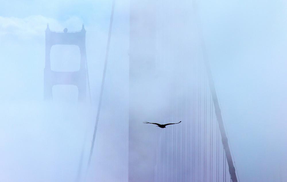 Foggy Flight, Golden Gate Bridge, San Francisco, CA
