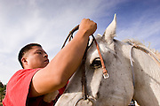 "09 SEPTEMBER 2007 -- ST. MICHAELS, AZ: DONAVAN FABER, from Navajo, AZ, puts a bridle on his horse before the horse was ridden in a traditional Navajo Horse Race in the summit area of the Navajo Indian reservation about 10 miles west of St. Michaels, AZ. Traditional horse racing is making a comeback on the Navajo reservation. The races are run on improvised courses that vary depending on the local terrain. Use of saddles is optional (except in the ""Cowhand Race"" which requires a western style saddle) and many jockeys ride bareback. The distances vary from one mile to as long as thirty miles. Traditional horse races were common until the 1950's when they fell out of favor, but there has been a resurgence in traditional racing since the late 1990's and now there is a traditional horse racing circuit on the reservation. The race was organized by the Begay family of Steamboat, AZ and run on private land about three miles from a paved road.  Photo by Jack Kurtz"