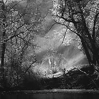 Woodland with river and trees and sun lighting the leaves