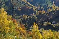 Cultural landscape, Magurai, National Park Piatra Craiului, Transylvania, Southern Carpathians, Romania