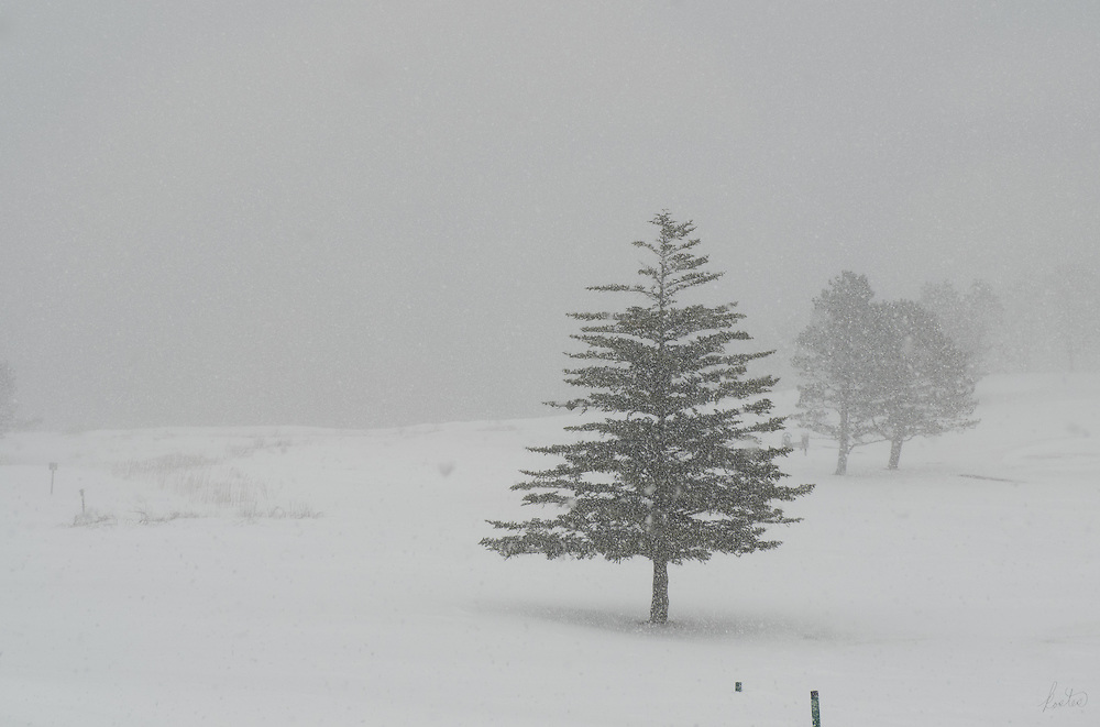 It's a blizzard this winter's day in Mid-Coast Maine, very low visibiltiy adds mood and mystery.