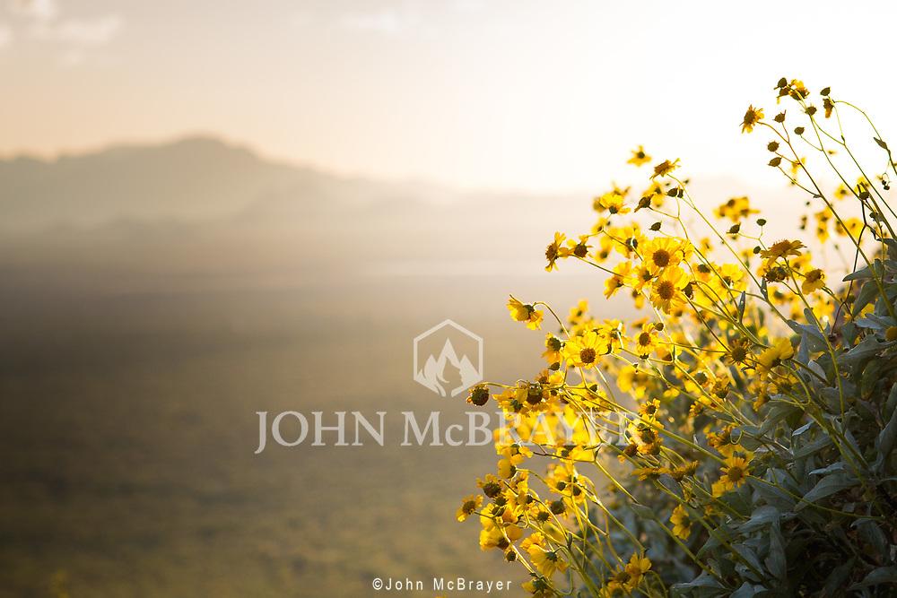 Taken while waiting for the sun to set near the outskirts of Tucson, AZ. © John McBrayer 2015