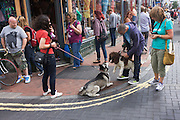 A Springer Spaniel and one other unknown breed of dog, use their senses of smell on a Brighton street corner.