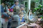 """Mannheim. 02.01.18   <br /> Luisenpark. Feature im Pflanzenschauhaus. Viele Besucher, darunter Familien, nutzen die """"Freien Tage"""" nach Weihnachten und Neujahr für einen Besuch im Luisenpark.<br /> Kinder vor einem Terrarium mit einer Dunklen Tigerpython.<br /> - Arthur, Bela, Severin Rückauer und Yvonne Rückauer<br /> Bild: Markus Prosswitz 02JAN18 / masterpress (Bild ist honorarpflichtig - No Model Release!) <br /> BILD- ID 00448  """
