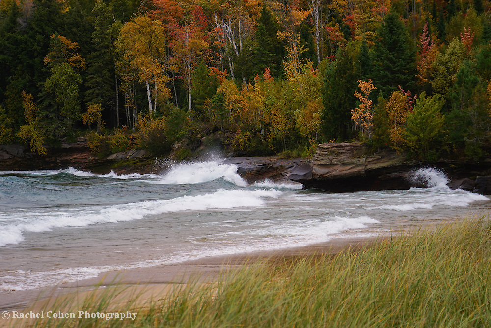 &quot;Autumn Spray&quot;<br />