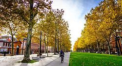A cyclist in the Esplanade des Français d'Afrique du Nord, Toulouse, France<br /> <br /> (c) Andrew Wilson | Edinburgh Elite media