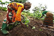 Sweet potato farmers Mwanaidi Ramadhani (L) and Maria Mchele (R) transplant sweet potato plantlets on a farm run by a local farmer's group in the village of Mwazonge, roughly 30km southwest of Mwanza, Tanzania on Sunday December 13, 2009.