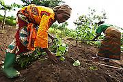 Sweet potato farmers Mwanaidi Ramadhani (L) and Maria Mchele (R) transplant sweet potato plantlets on a farm run by a local farmer's group in the village of Mwazonge, roughly 30km southwest of Mwanza, Tanzania on Sunday December 13, 2009.
