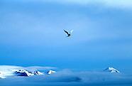 Svalbard, Spitsbergen