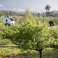 Auftraggeber: Jan Harmsgat Country House , Ort: Swellendam, South Africa