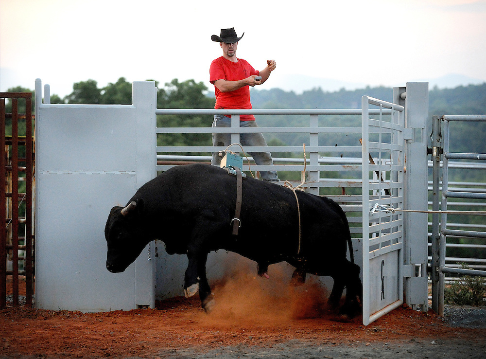 J.C. Childress uses a bucking dummy on his bulls to train them for competition.  The dummy is on the back of the bull and is released by remote after eight seconds, the time a rider would be on the bull.