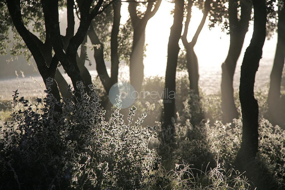 Bosque de encinas helado. La Rioja ©Daniel Acevedo / PILAR REVILLA