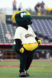 09 June 2011: Cornbelters mascot Corny during a game between the Lake Erie Crushers and the Normal Cornbelters at the Corn Crib in Normal Illinois.