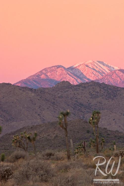 Winter Sunrise Alpenglow on Mount San Gorgonio, Joshua Tree National Park, California
