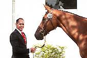 Chio Aachen - World Equestrian Festival