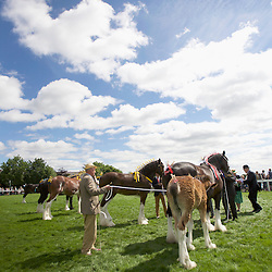 Great Yorkshire Show 2016 Shires