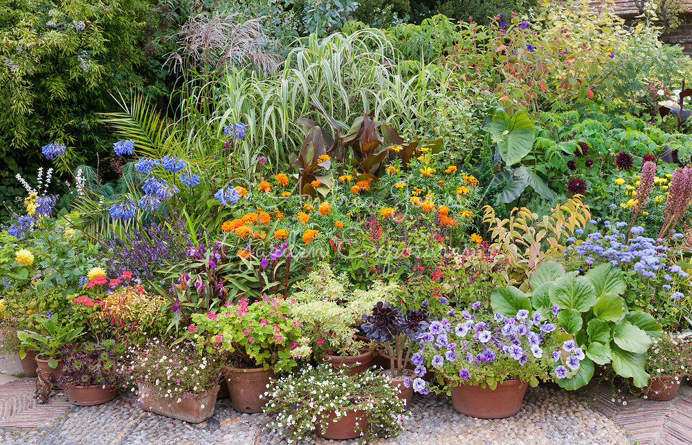 Planted containers in summer at Great Dixter, East Sussex, England