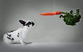 2018 - október kanína og gulrót
