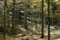 10 Oct 2011: hiking trail lined with the autumn colors of leaves on the trees.  Rural Indiana, specifically in or close to Brown County.