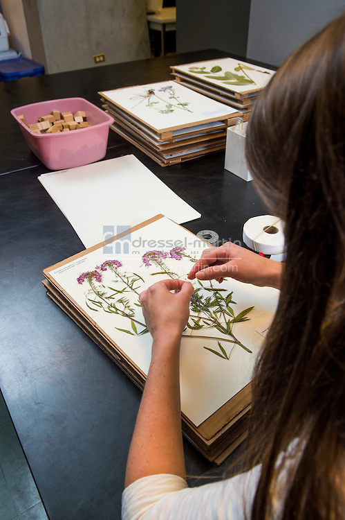 research herbarium artist in residence