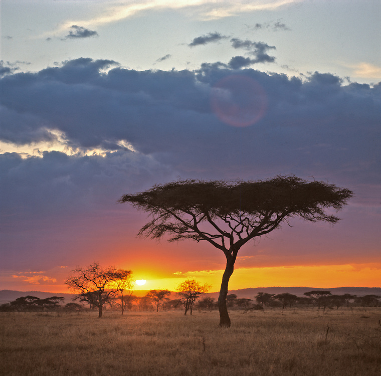 The air is still as the sun sets below the clouds in Serengeti National Park, Tanzania.