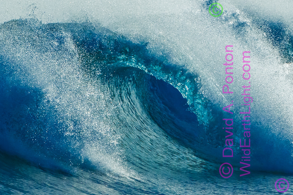 Ocean wave breaks into a complete tube with glassy roof colored blue as the sulight penetrates the water. © 2010 David A. Ponton