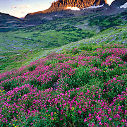 Sunset over Reynolds Mountain with monkey flowers in foreground.