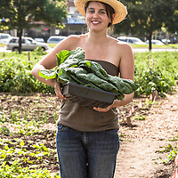 A young woman in a straw hat stands in a market garden, holding  an arm of freshly harvested greens.