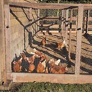 NLD/Bussum/20131219 - Perspresentatie nieuwe real life soap Utopia, de 25 kippen