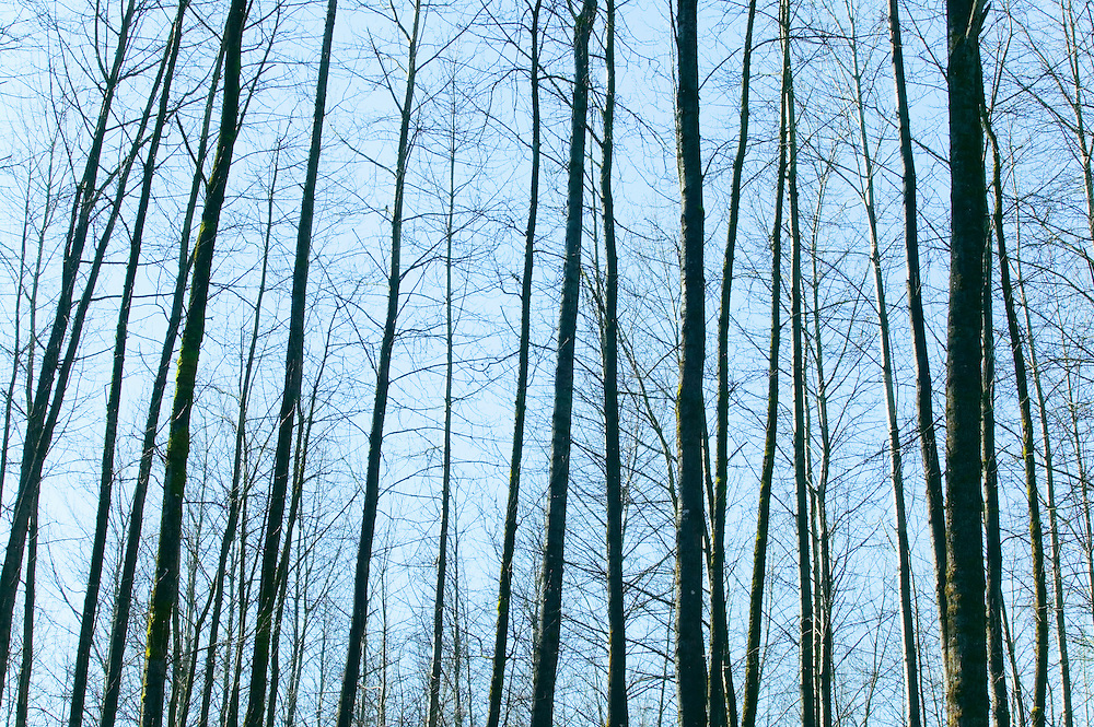 bare winter trees