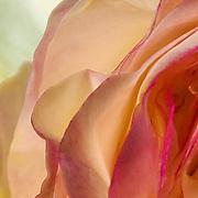 Roses Romance n Petals