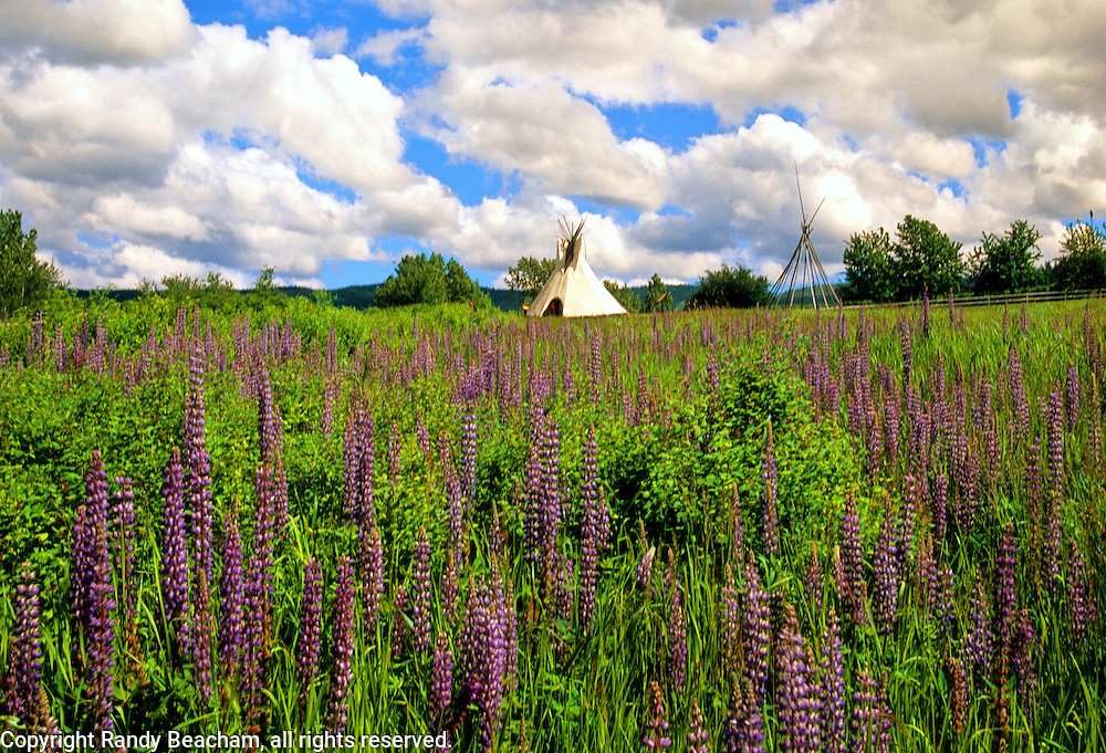 Lupines and Tepees in summer. Cataldo Mission State Park, Benewah County, North Idaho