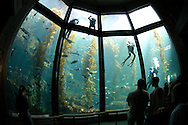 Monterey Bay Aquarium California United States&amp;#xA;&copy; KIKE CALVO - V&amp;W&amp;#xA;( zoo captivity education divers volunteers cleaning maintenance<br />