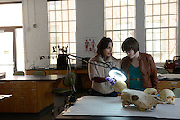 Ann Ross works in her forensic bone with a graduate student lab at the Park Shops. Photo by Marc Hall