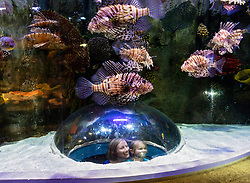 Underwater Zoo aquarium at Dubai Mall in United Arab Emirates