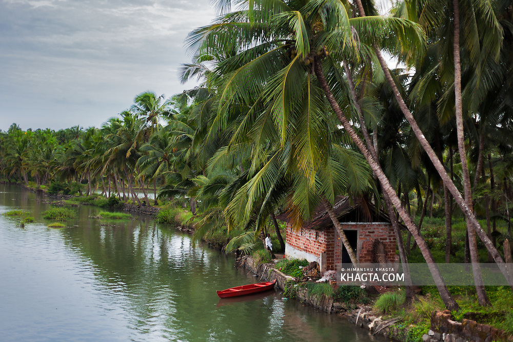 A boat next to a coconut farm in Kerala, India