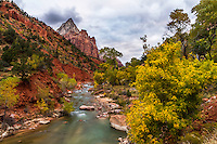 The Virgin River flows through Zion National Park in the Fall with the stunning red cliffs surrounding you.