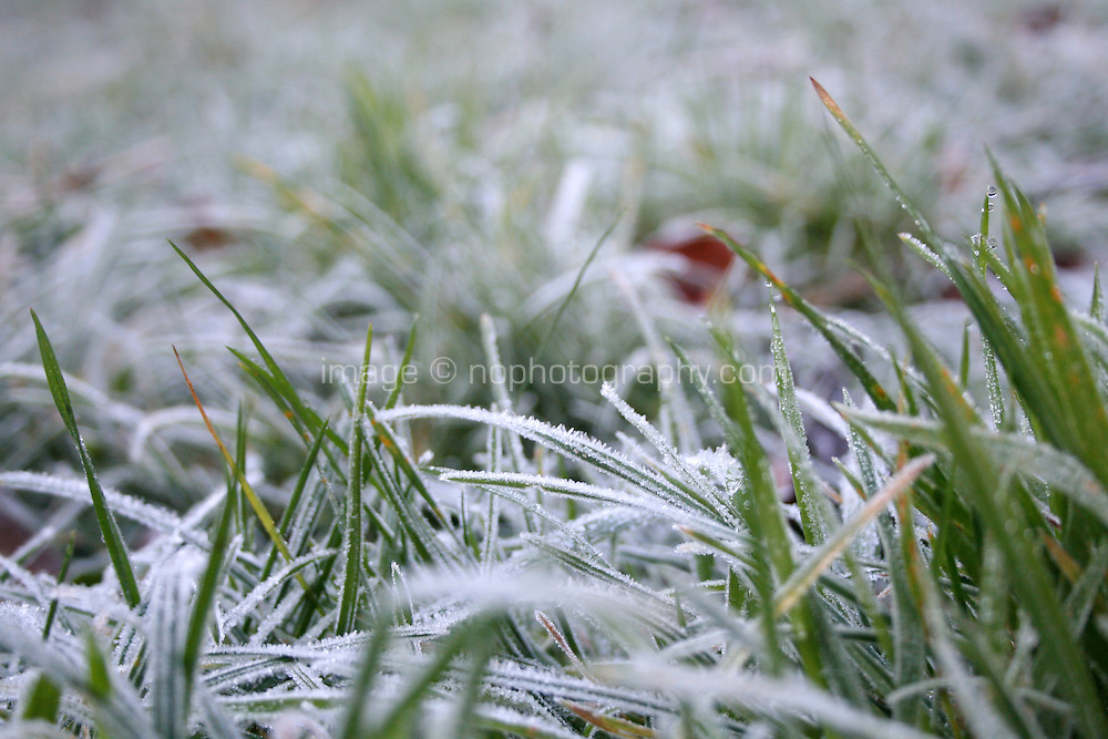 Frost covered grass in an Irish garden