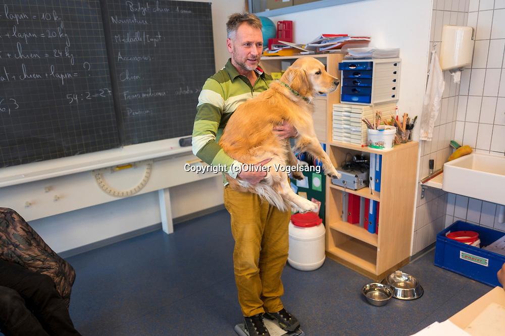 Saint-Cergue, décembre 2017. reportage dans une école spécialisée à St-Cergue, dans laquelle un chien scolaire est utilisé depuis le début de l'année pour venir en aide et calmer les élèves. C'est le premier chien à être utilisé de la sorte en Suisse romande. Stephan Läng pèse Tahiti. © Olivier Vogelsang