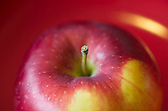 McIntosh Apple, Malus domestica, red yellow, macro closeup, red background