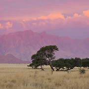 Namib Savannah and mountains at sunset.