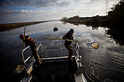 Grad students working for UC Davis researcher Louise Conrad net stunned fish on an electrofishing trip looking into invasive species near Discovery Bay, December 14, 2009.