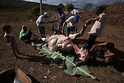 Sao Joao do Paraiso_MG, Brazil.<br /> <br /> Turma que tinha acabado de matar um boi, bem na beira da estrada em Sao Joao do Paraiso.<br /> <br /> People who had just killed an ox, and on the roadside in Sao Joao do Paraiso.<br /> <br /> Foto: LEO DRUMOND / NITRO