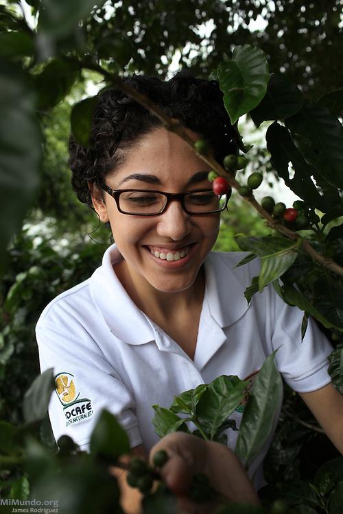 Susana Chacón Bustos, Quality Control Supervisor for COOCAFE, checks coffee cherries near the Plaza del Café Restaurant. COOCAFE, Tilarán, Guanacaste, Costa Rica. August 22, 2012.