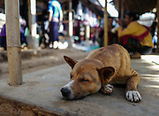 A  dog rests in the Indein Market, Myanmar.