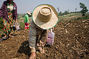 "25 FEBRUARY 2008 -- MAE SOT, TAK, THAILAND: Burmese migrant farm workers plant corn on a farm owned by a Thai farmer near Mae Sot, Thailand. One of the workers said all of the farm workers in the area were Burmese because Thais wouldn't do the work. There are millions of Burmese migrant workers and refugees living in Thailand. Many live in refugee camps along the Thai-Burma (Myanmar) border, but most live in Thailand as illegal immigrants. They don't have papers and can not live, work or travel in Thailand but they do so ""under the radar"" by either avoiding Thai officials or paying bribes to stay in the country. Most have fled political persecution in Burma but many are simply in search of a better life and greater economic opportunity.  Photo by Jack Kurtz"